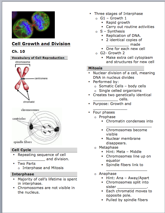 an essay on the cell cycle Cell cycle essays cell reproduction is the leading cause of growth and developement in our bodies this reproduction is caused by the cell cycle, which is defined as the life of a cell from.